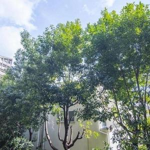 ロムルスコート幡ヶ谷(3階,9980万円)のお部屋からの眺望