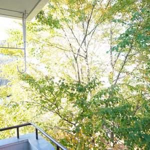 ファミネス小石川(4階,)のお部屋からの眺望