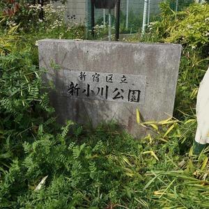 飯田橋第一パークファミリアの近くの公園・緑地
