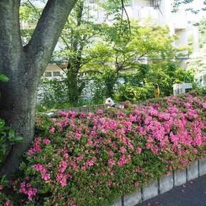 信濃町ハイムの近くの公園・緑地