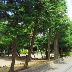 日神デュオステージ新中野の近くの公園・緑地