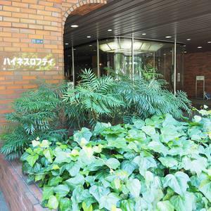 ハイネスロフティのマンションの入口・エントランス