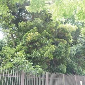 御苑パビリオンの近くの公園・緑地