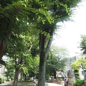 ライオンズマンション初台第2の近くの公園・緑地