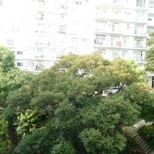 マンション雅叙苑5号館の外観