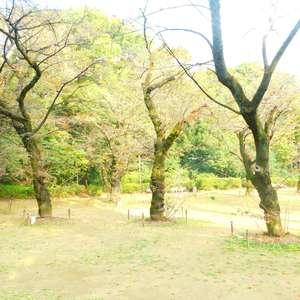 パシフィック哲学堂マンションの近くの公園・緑地