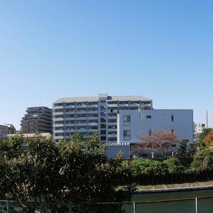 亀戸天神リリエンハイム(2階,)のお部屋からの眺望
