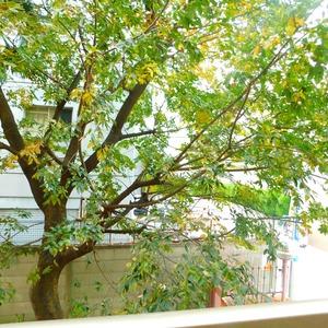 信濃町ハイム(4階,4680万円)のお部屋からの眺望