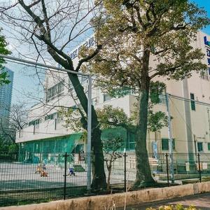トーア南晴海マンションの保育園、幼稚園、学校