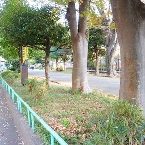 フィールT幡ヶ谷の近くの公園・緑地